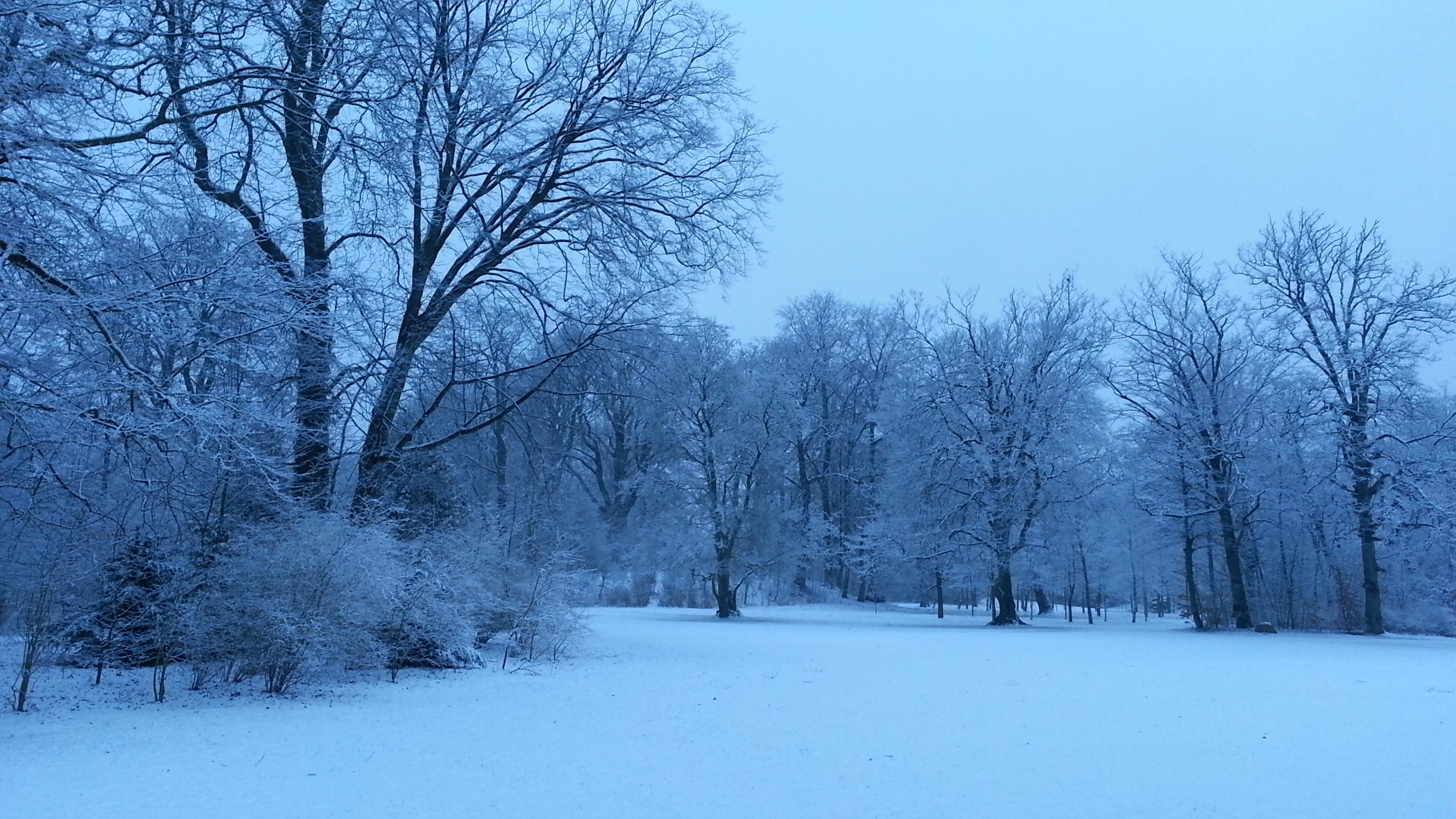 Vintermorgen